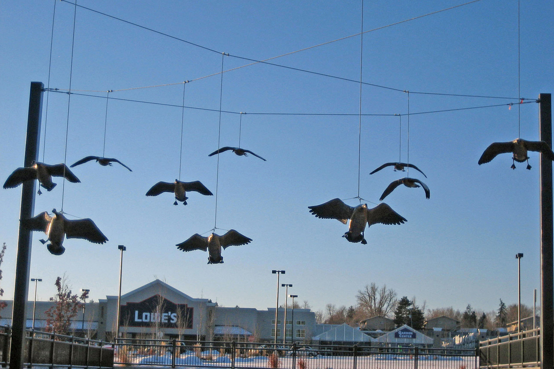 Image 4 of Gathering Place. All 10 Canada Geese coming in for a landing.